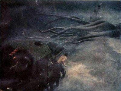final squid